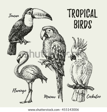 Hand drawn sketch black and white vintage exotic tropical birds set. Vector illustration isolated object