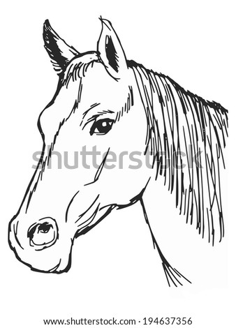 hand drawn, sketch, cartoon illustration of head of horse