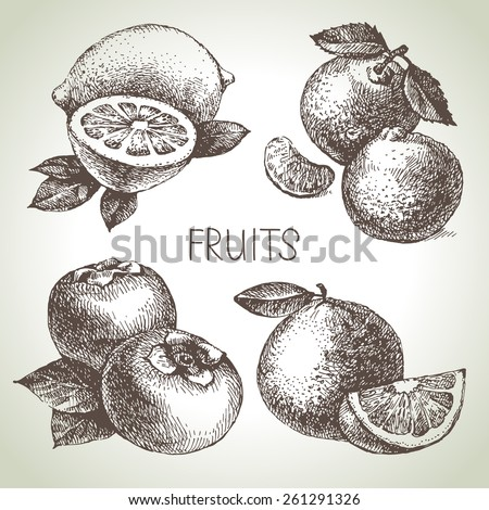 Hand drawn sketch fruit set. Eco foods. Vector illustration - stock vector