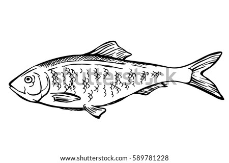 Fish Black And White Drawing