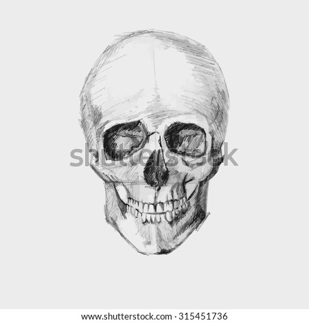 Hand drawn sketch human skull . vector illustration