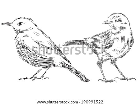 Hand drawn Sketch of birds - Vector Illustrations - stock vector