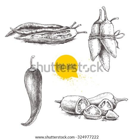 Hand drawn sketch style chili peppers set. Eco food vector illustration. Ripe and sliced peppers. Isolated on white background. - stock vector