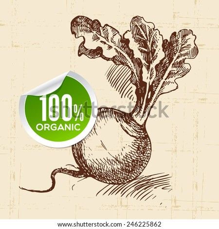 Hand drawn sketch vegetable turnip. Eco food background.Vector illustration - stock vector