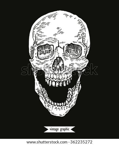 Hand drawn skull in monochrome line art graphic. Vector illustration of human skull vintage.