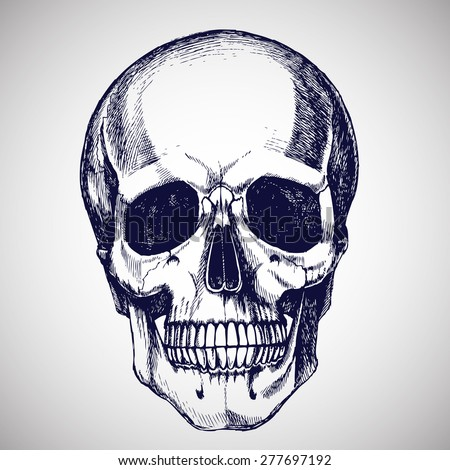 Hand drawn skull. Vector illustration.