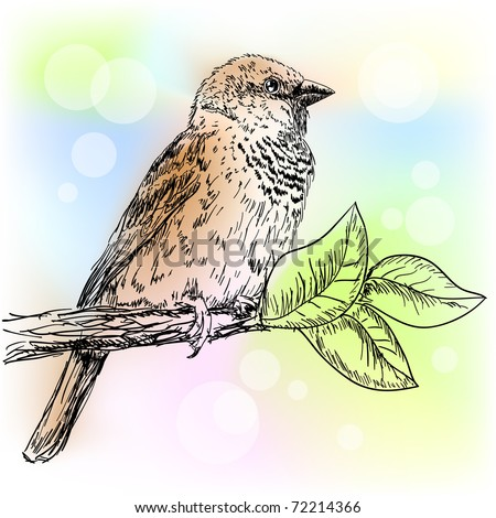 Hand drawn sparrow bird sitting on a branch - stock vector