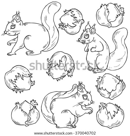 Hand drawn squirrel and nut collection in vector - stock vector