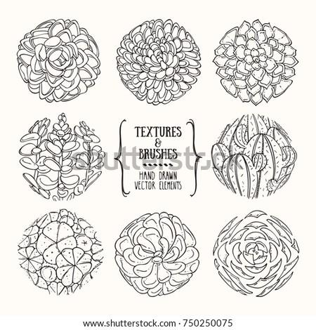 Hand Drawn Succulent Illustration Botanical Drawing Stock Photo ...