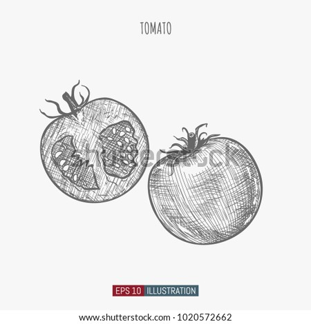 hand drawn tomato isolated template your stock vector 1020572662