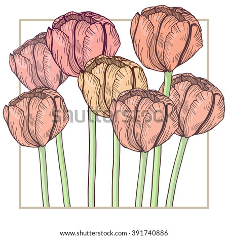 Hand-drawn tulips in delicate frame. Isolated flowers on white background. Pastel tender colors. Vector illustration - stock vector