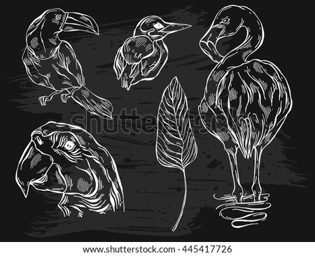 Hand drawn vector graphic lined illustrations set of tropical birds toucan,parrot macaw,flamingo and kingfisher. - stock vector