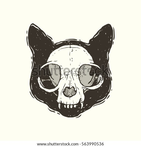 cat skull stock images, royalty-free images & vectors | shutterstock
