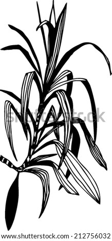 Hand drawn vector illustration with branch by plant. - stock vector