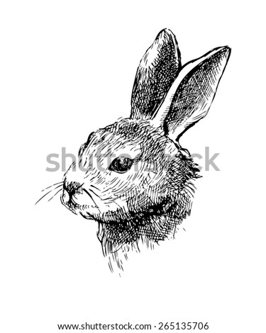 Hand drawn vector rabbit - stock vector
