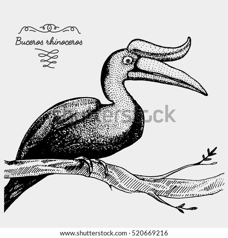 Rhinoceros Hornbill Stock Photos