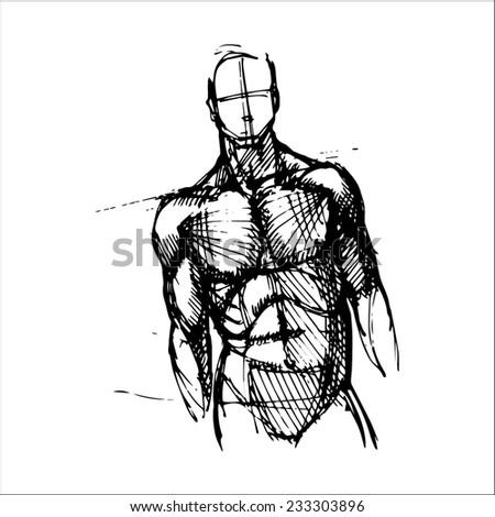 hand drawn vector sketch art of front facing male torso - stock vector