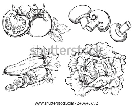 Hand Drawn Vegetables Set. Tomato, cucumber, mushrooms, cabbage isolated on white background. Vector illustration - stock vector