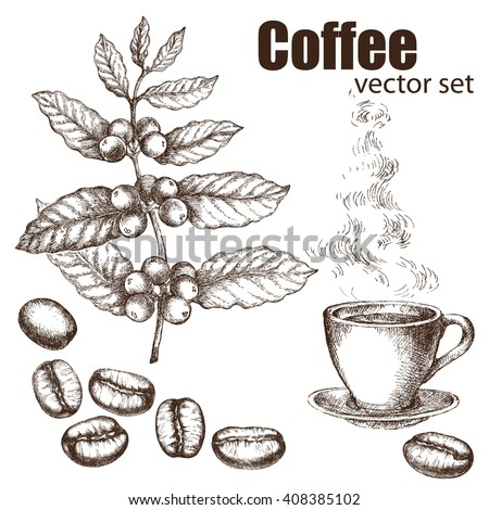 Hand drawn vintage coffee plant. Elements for the graphic design of the menu bars, restaurants, invitations, announcements. Coffee beans and coffee cup.  The steam rising from the hot coffee. - stock vector