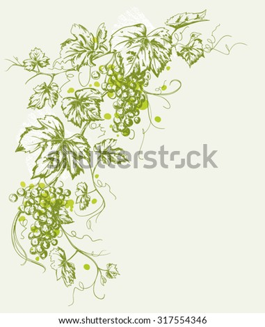 Hand drawn Vintage illustration of a grapevine with fruits isolated on paper background with copyspace - stock vector