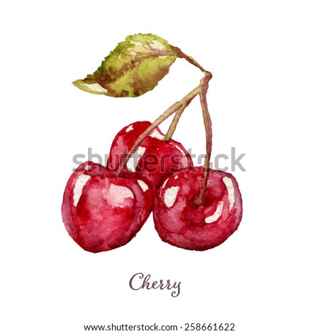 Hand drawn watercolor painting of cherry. Vector illustration on white background, eps10 - stock vector
