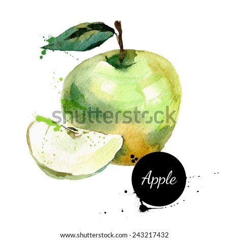 Hand drawn watercolor painting on white background. Vector illustration of fruit apple - stock vector