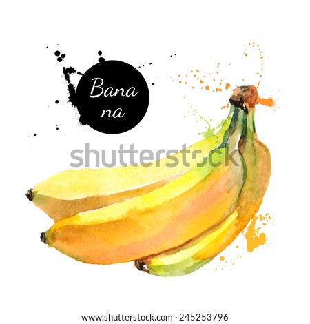 Hand drawn watercolor painting on white background. Vector illustration of fruit banana - stock vector