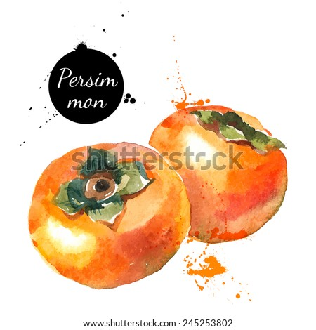Hand drawn watercolor painting on white background. Vector illustration of fruit persimmon - stock vector