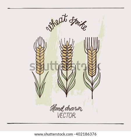 Hand drawn wheat ears, wheat spike. Vector illustration. - stock vector