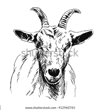 Hand Sketch Goat Head Stock Vector 412960765 - Shutterstock Goat Face Side Drawing