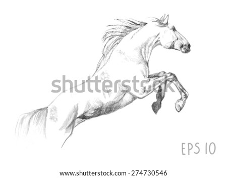 handdrawn of jumping horse sketch with pen in vector format. EPS 10 - stock vector