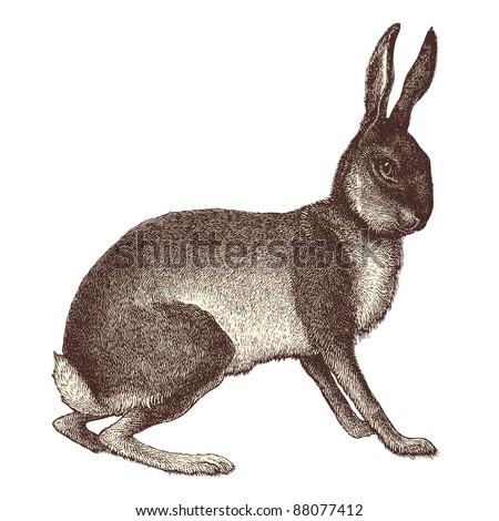 "Hare - Vintage engraved illustration - ""Cent récits d'histoire naturelle"" by C.Delon published in 1889 France - stock vector"