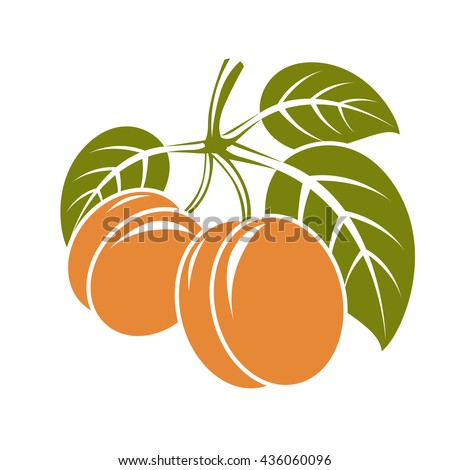 Harvesting symbol, vector fruits isolated. Ripe organic sweet apricots with green leaves, healthy food idea design icon. - stock vector