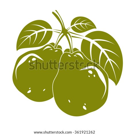 Harvesting symbol, vector fruits isolated. Two organic sweet pears with green leaves, healthy food idea design icon. - stock vector