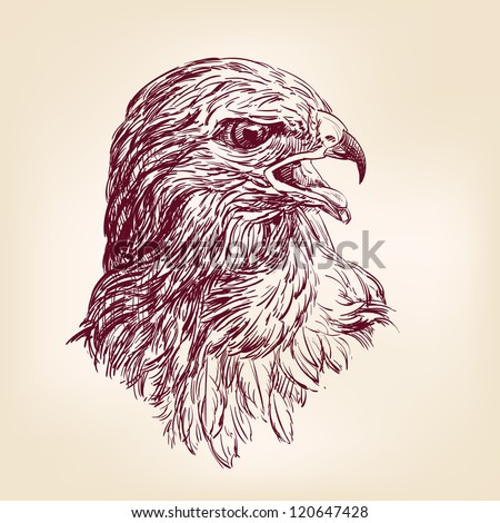 hawk - hand drawn  vector illustration  isolated