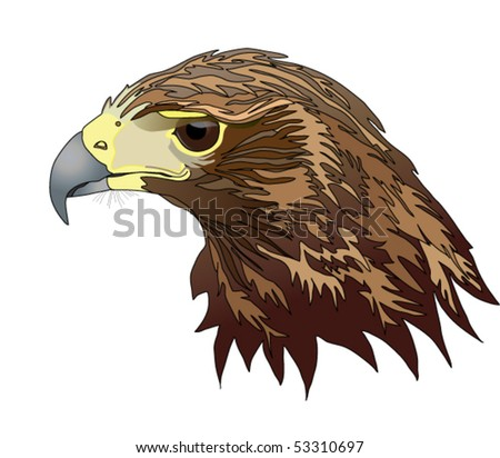 Harris Hawk Stock Photos, Images, & Pictures | Shutterstock