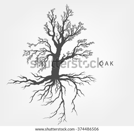 hazel tree on a white background with leaves and root system - stock vector
