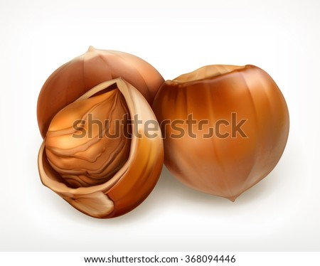 Hazelnuts in shell, vector icon - stock vector