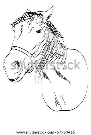 head of a horse freehand vector - stock vector