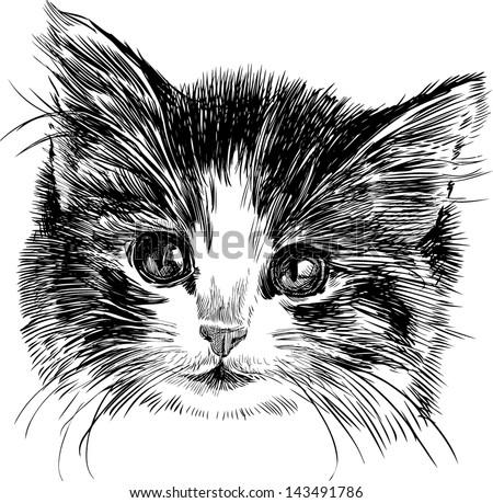 head of a kitten - stock vector