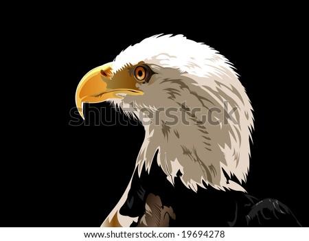 Head of Bald eagle - VECTOR - stock vector