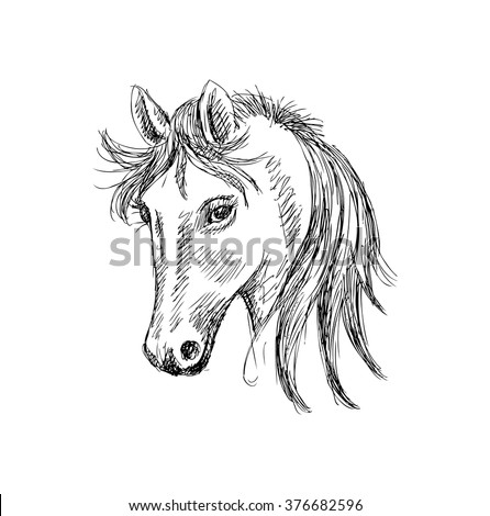 Head of horse. Sketchy style.