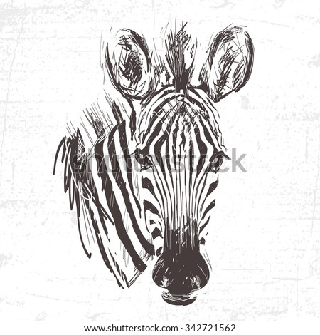 Head of zebra in the technique of engraving. Handmade. See also other animals - stock vector
