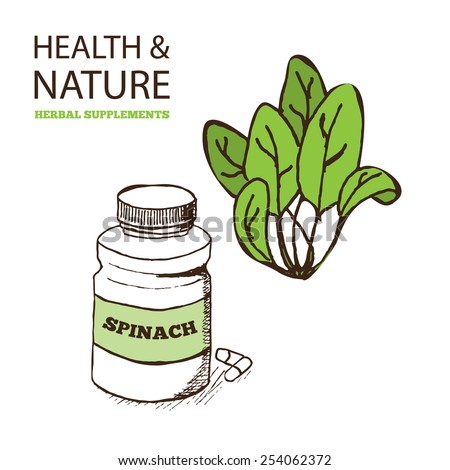 Health and Nature Supplements Collection.  Spinach - Spinacia oleracea - stock vector
