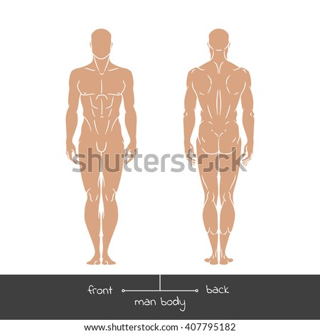 Healthy young man from front and back view. Male muscular body shapes outline vector concept illustration with the inscription: front and back. Vector illustration of a human figure in linear style. - stock vector