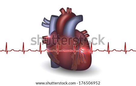 Heart anatomy and cardiogram on a white background. Colorful design with light shades.