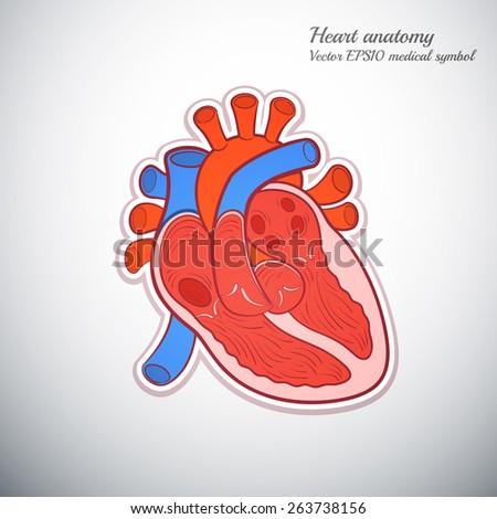 heart anatomy outline color icon medicine vector illustration - stock vector