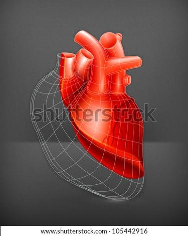 Heart structure, vector - stock vector