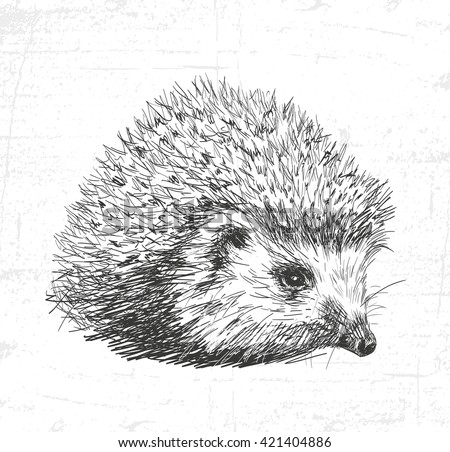 Hedgehog, wild animals. See also the other sets of animals. - stock vector