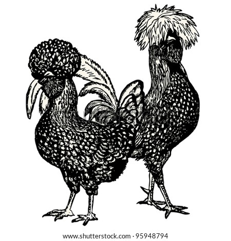 "Hen and Cock (Polish race)  vintage engraved illustration - ""Dictionnaire encyclopedique universel illustre"" By Jules Trousset - 1891 Paris - stock vector"